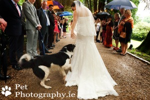 Alby-Dog-Wedding-Ballybeg-08
