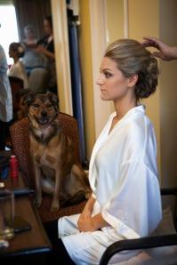 getting-ready-dog