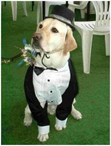 incorporating-pets-at-your-wedding-ring-bearer-dog