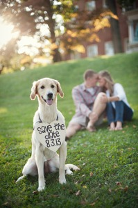 save-the-date-dog