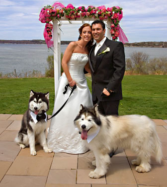 Incorporate Your Dogs Into Your Wedding Budgeted Wedding