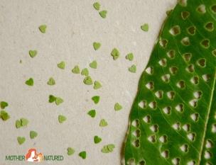 Eco-friendly-Confetti-1